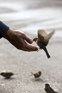 Person's hand reaching out to feed a small bird with outstretched wings giving a sense of joy and no social anxiety.